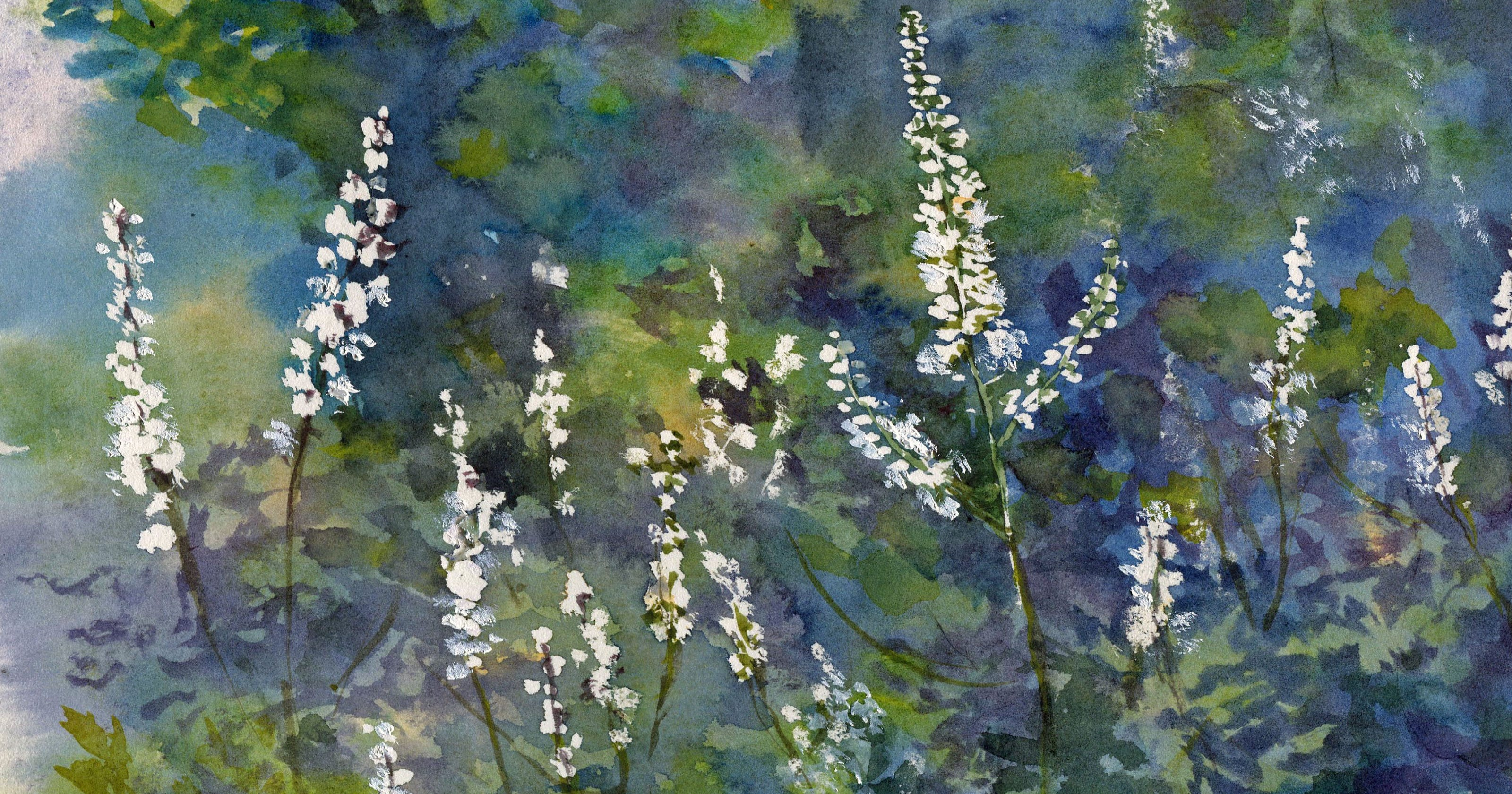 Nature Journal: Why scientists changed cohosh's name