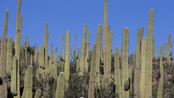 The Trust for Public Land has donated 282 acres to Saguaro National Park in honor of the National Park Service centennial.