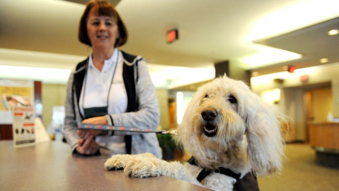 Nine-year-old Misha, a Golden Doodle therapy dog, checks in at the front desk at Mission Health Systems Friday with her owner Kay Loveland. Misha has helped over a thousand people. She works in prisons, hospices and hospitals.