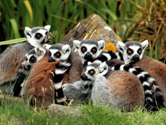 635720458809623721-Madagascar-WT-owns-Rachel-A-Bennett-123rf3338068-adj