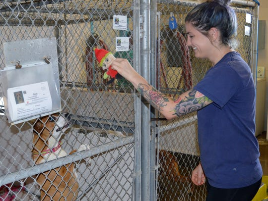 Keyana Miller, Valley Oak SPCA animal care staff plays