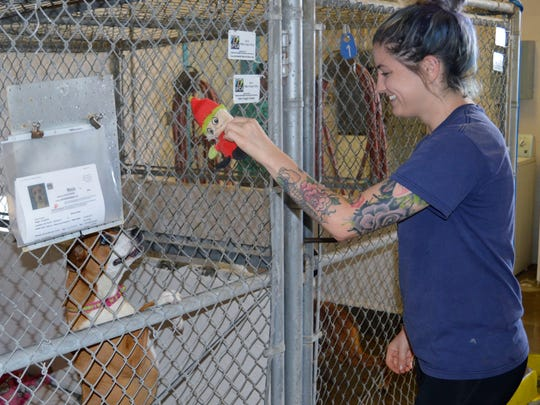Keyana Miller, Valley Oak SPCA animal care staff plays with Macie Wednesday morning. Macie is one of 16 dogs at the shelter ready to be adopted.