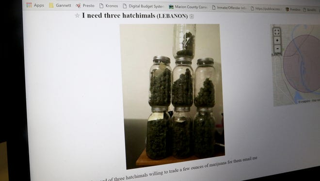 A Craigslist advertisement hoping to trade Òa few ounces of marijuanaÓ for three Hatchimal toys. Photographed on Thursday, Dec. 8, 2016.