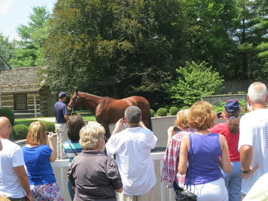 At Ashford Stud horse farm in Lexington, Kentucky, fans admire Triple Crown winner American Pharoah.
