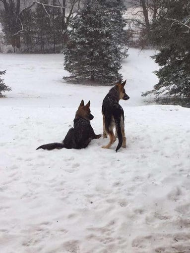The pups are enjoying the snow in Newton.