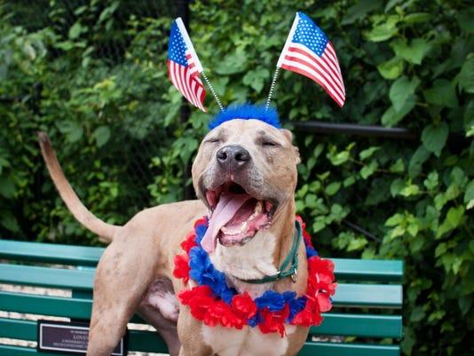636028815856728142-Pets-fireworks.jpg