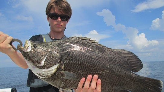 Big tripletail are being caught off the Mississippi