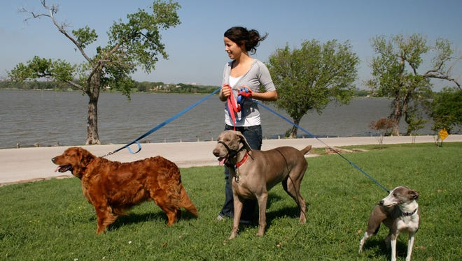 Young woman working as a Pet Sitter, walking three dogs on a windy late morning by the lake.