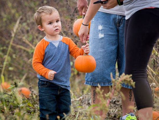 Bentley Watts attempts to choose a pumpkin while out