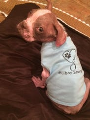 Libre models a #LibreStrong doggie T-shirt sent to