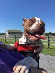 Libre is now in his forever home with Speranza Animal