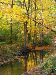 Parson's Creek runs through Hobbs Woods, a popular