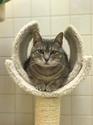 Rosie Cozy is waiting for you at Nashville Humane Association.