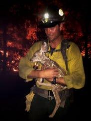 One fawn rescued by a Flagstaff Hotshot.