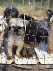 The Jim Wells County Sheriff's Office found eight Shih