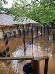 Flooding in Houston has left shelter dogs in serious