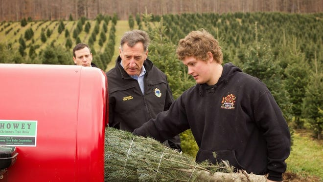 Gov. Peter Shumlin helps harvest a Christmas tree at Purinton's Christmas Tree Farm in Huntington Monday.