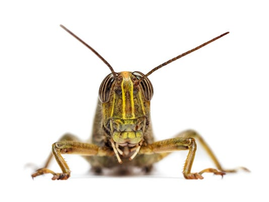 crop pest.jpg