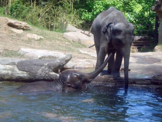 1407338732000-3-St-Louis-Zoo-St-Louis-MO-03