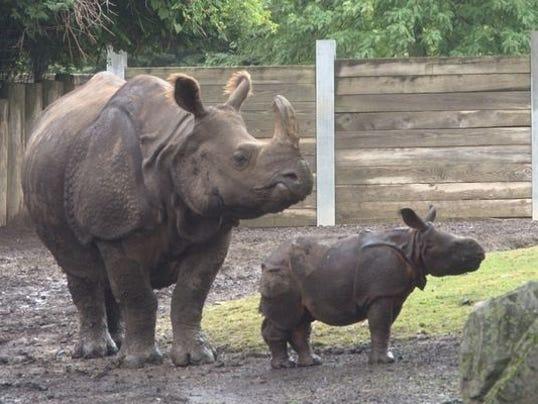 1404771864000-BabyRhinos