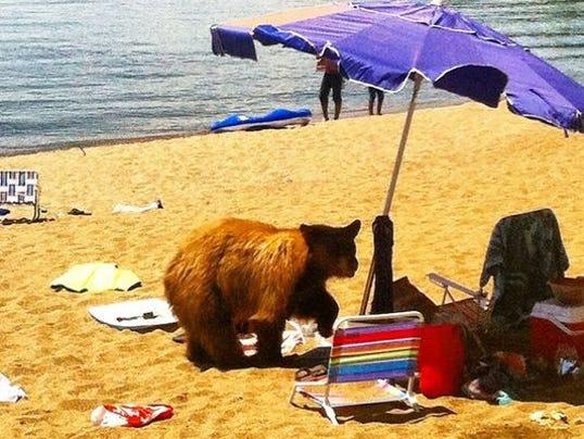 Resultado de imagem para bear beach