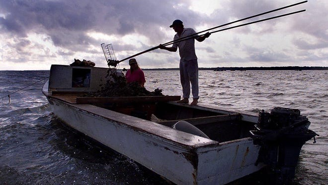 Seafood workers harvest oysters in the Apalachicola Bay.