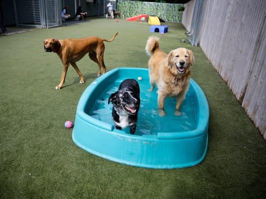 Pets Dog Fat Camp_Mein (1).jpg