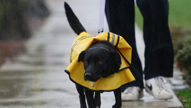 Adam Stricker, of Wood-Ridge, covered Peanut, his 3 year old dog, with a raincoat as they go for their morning walk in Wood-Ridge on Wednesday April 25, 2018.