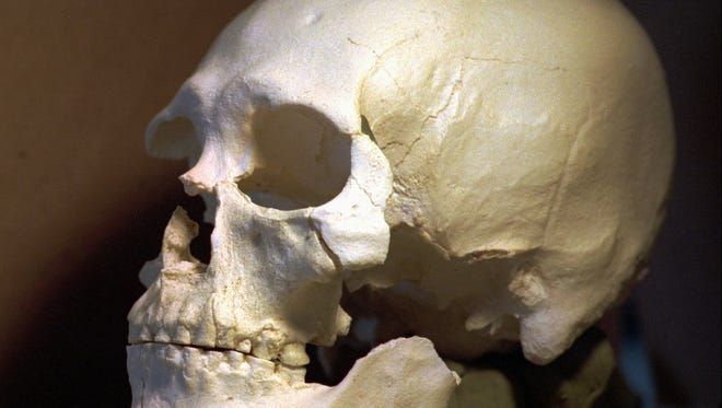 This July 24, 1997, file photo shows a plastic casting of the skull from the bones known as Kennewick Man in Richland, Wash.