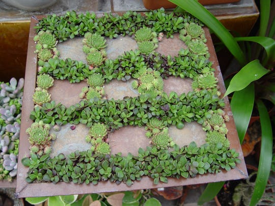Rectangular trays make ideal modern geometry when blended with small succulents.