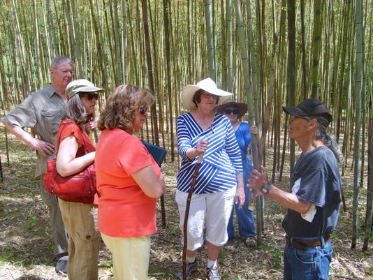 bamboo-walking-tour.jpg