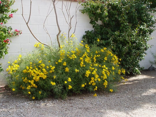 Irrigation must be continually changed with the seasons to keep plants happy and healthy even in gravel driveways!
