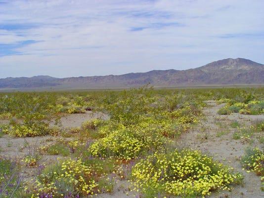 stratified soils