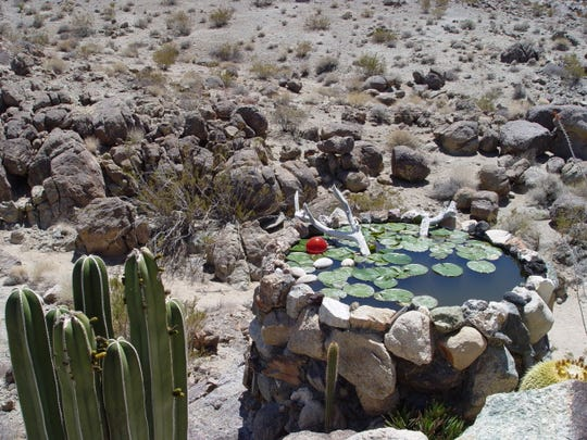 This Joshua Tree tank is a popular water hole for large birds of prey.