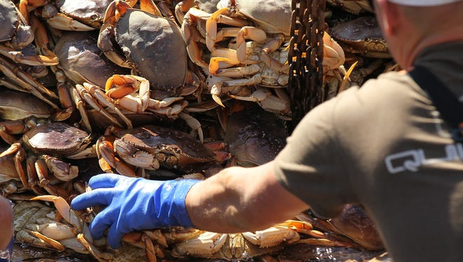 Fisherman offload Dungeness Crab from their fishing vessel on November 17, 2010 in San Francisco, California.