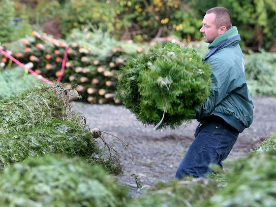 Josh Olmsted, owner of Olmsted Tree Farm on Clear Creek Road in Poulsbo, moves trees to be trucked to the Silverdale sales lot on Wednesday. Prices at Olmstead and elsewhere are up this year, thanks to a shortage of supply.