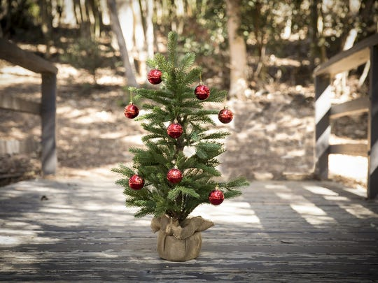 Small Christmas tree file photo.