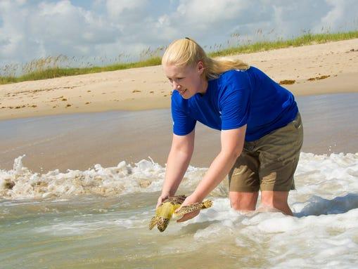 Two green sea turtles were returned to Sebastian Inlet