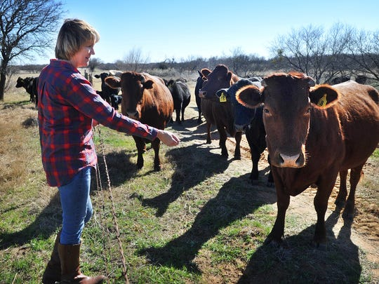 Sherri Lane talks to one of the red Bonsmara cattle she and her husband, Leo Lane, are raising on the J-L Ranch in Clay County. The family also has a few horses and grows coastal hay.