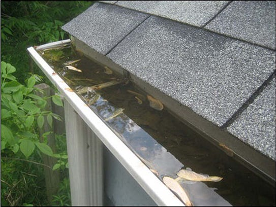 Any standing water, including clogged rain gutters,