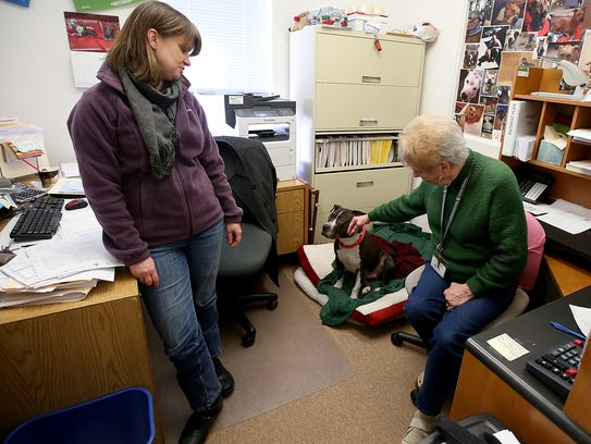 JoAnne Schnyder (left) and Karen Tanner, who work in accounting at Kitsap Humane Society, share their office space with Fats as he recovers from knee surgery.