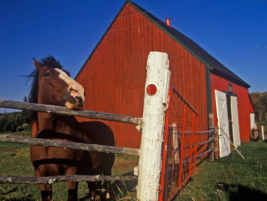 A horse on Cape Breton, Nova Scotia.
