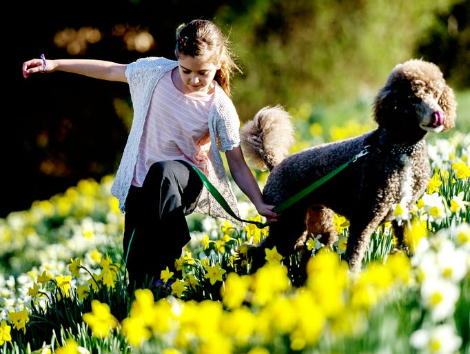 Brinlee Kelly, 8, of Knoxville, walks through a field