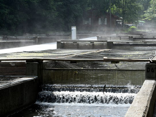 The Tellico Fish Hatchery in Tellico Plains has been