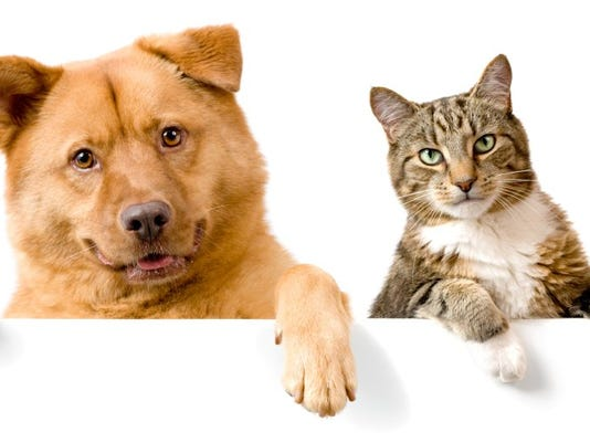 636138612648390373-catdog.jpg