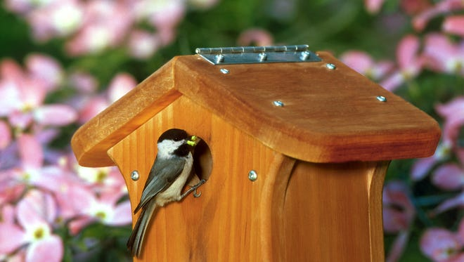 If you plan to leave your nest box out for birds to use during the winter, make sure to wash them thoroughly.