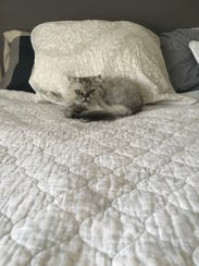 Macy enjoys sleeping on the bed in her new home.