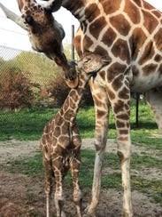 Moms get free admission to Dickerson Park Zoo on Mother's
