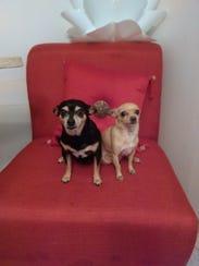 Lola and Nano Parents: The Barrera family Pet's age: