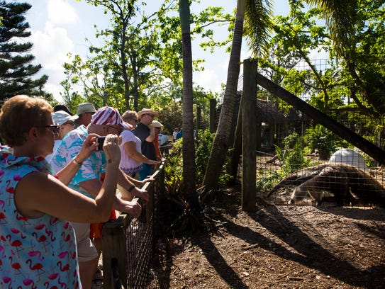 Guests photograph and observe the anteater exhibit Saturday, Oct. 14, 2017, during the reopening of the Naples Zoo after Hurricane Irma.